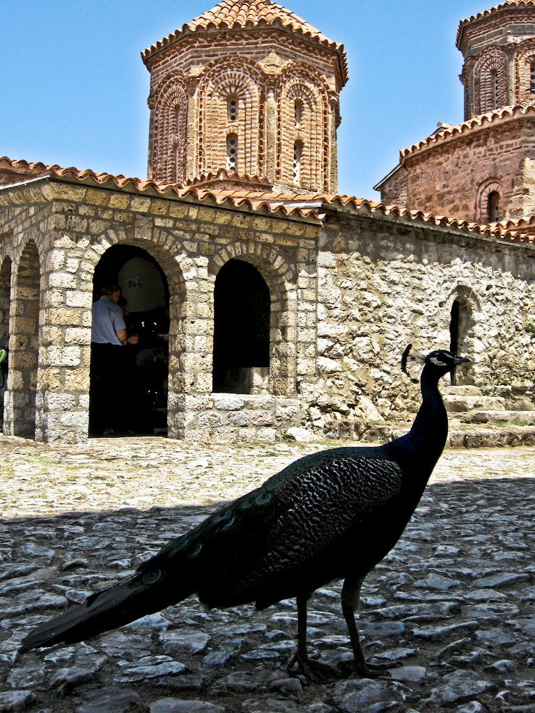 Darko.Onosimoski – Peacock in the Holy Monastery of Saint Naum_files